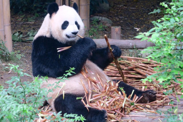 Panda-Student-Travel-Header-Image