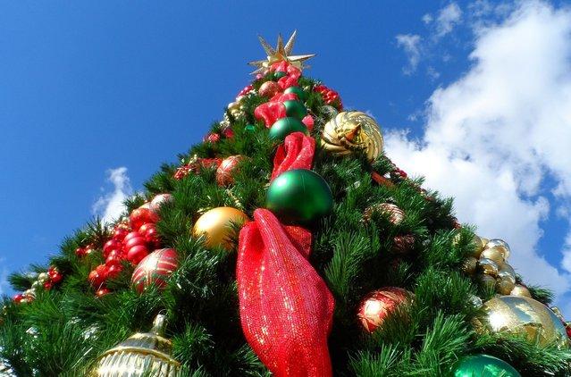 rsz_christmas-tree-227014_1280