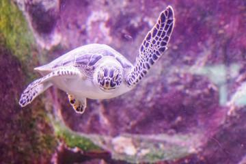 sea-turtle-1229714_1280