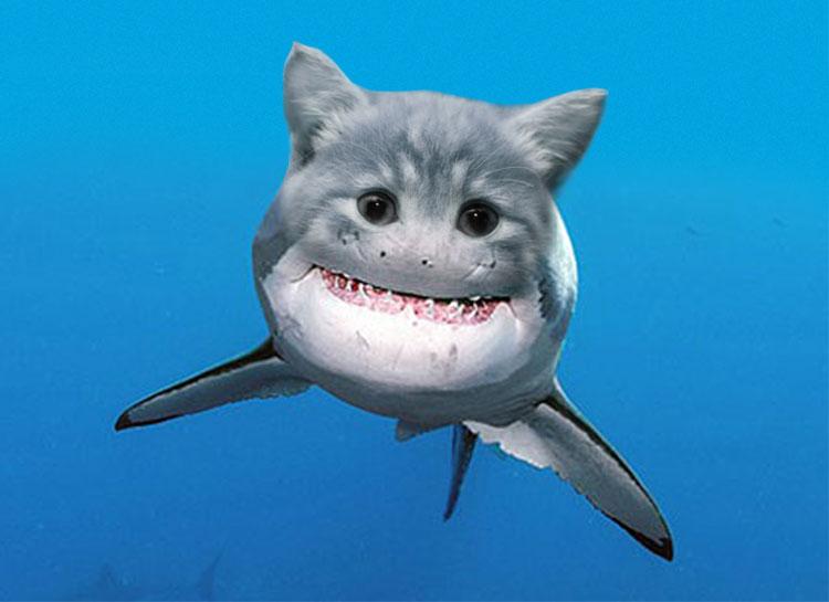 Student Pocket Guide - 5 Fantastic New Shark Species!