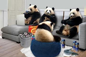 My-housemate-is-a-bear2