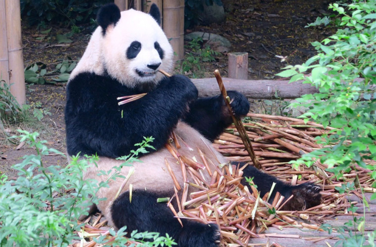 Panda-Student-Travel-Header-Image