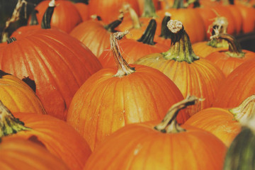Pumpkins-in-the-Autumn