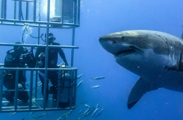 YHA-Shark-Dive