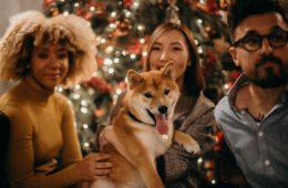 Dog Care | Reggae Dogs